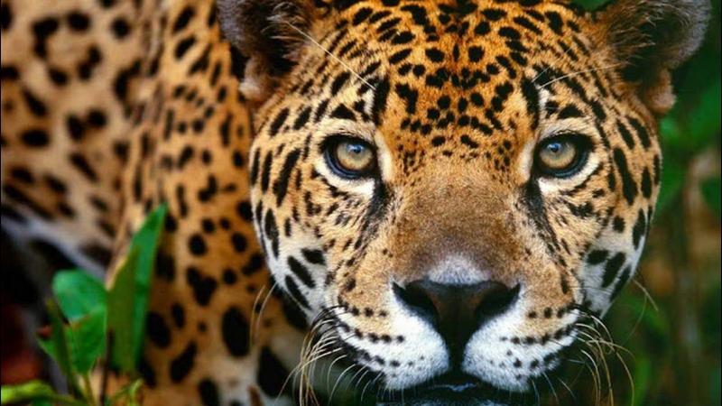 Jaguar Expedition (15 days – 14 nights)